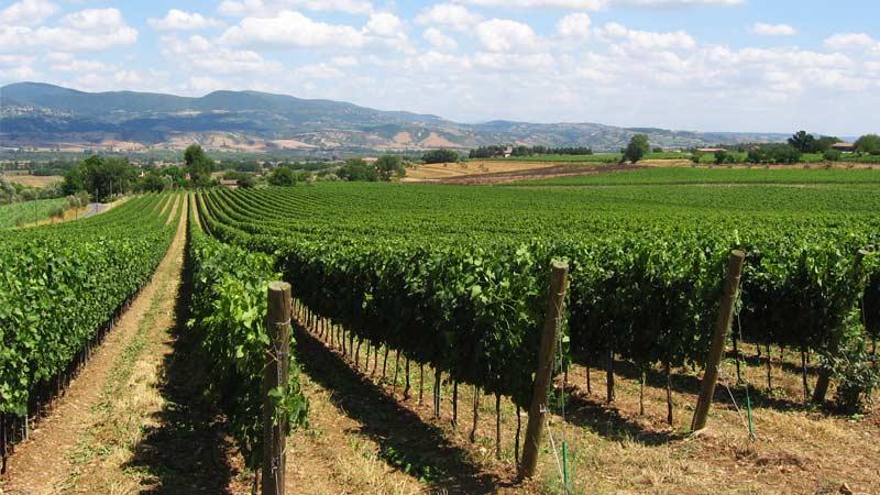 castiglione in teverina festa del vino
